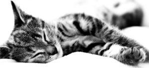 кремация кошки в москве