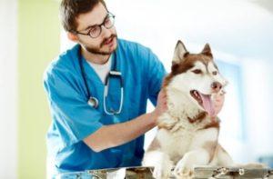 Вызов ветеринара из ветклиники на дом